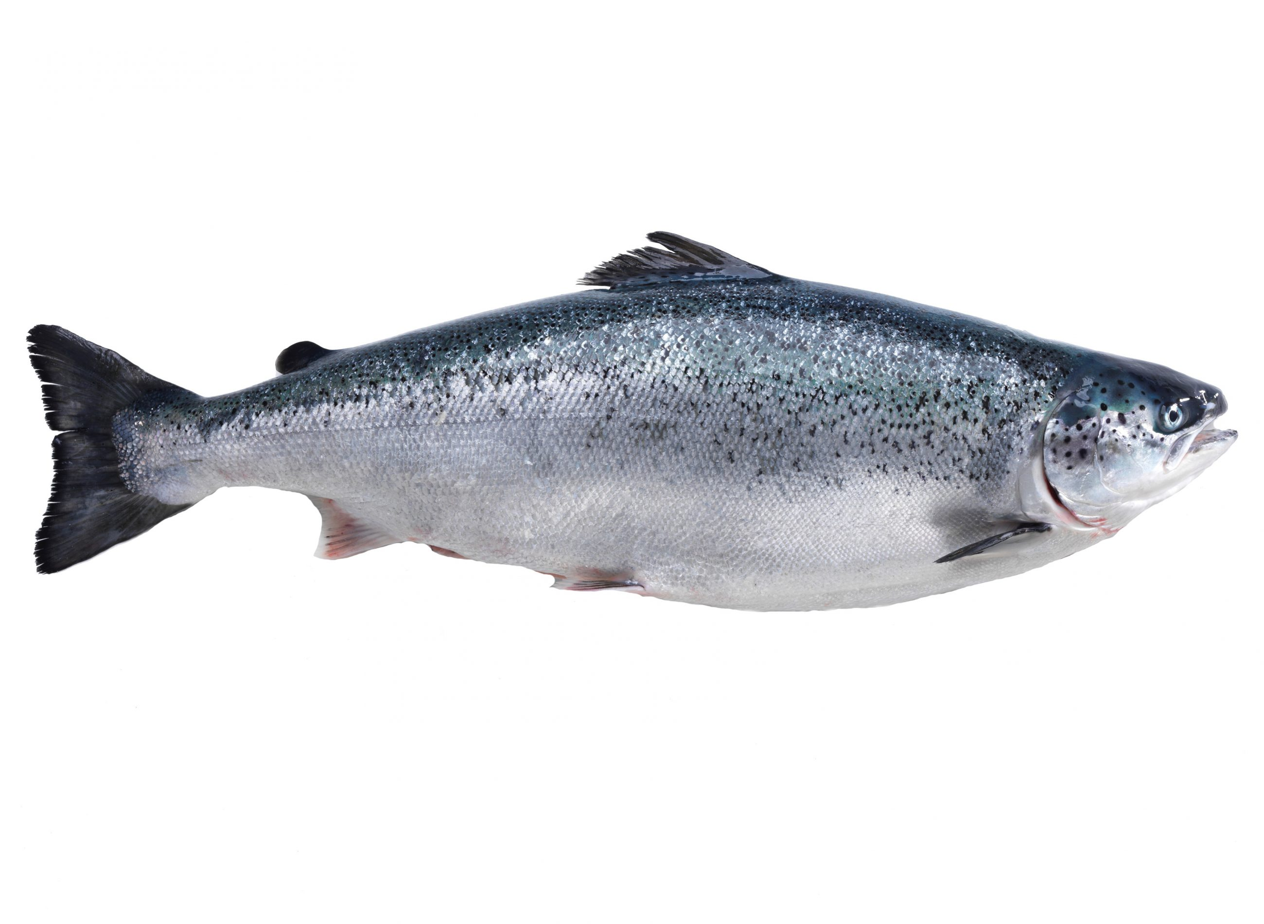 Product - Salmon