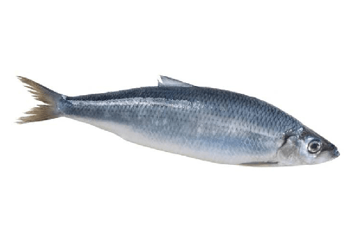 Atlantik Haddock Mail: Sourcing And Exporting Quality Seafood